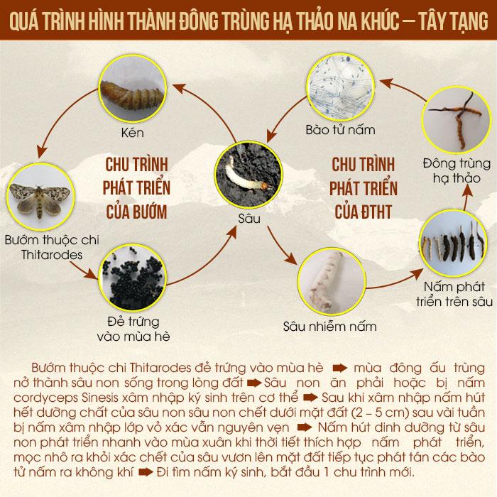 qua-trinh-phat-trien-dtht