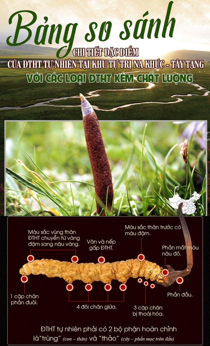 đặc điểm nhận biết dtht tự nhiên tây tạng và dtht kém chất lượng 1