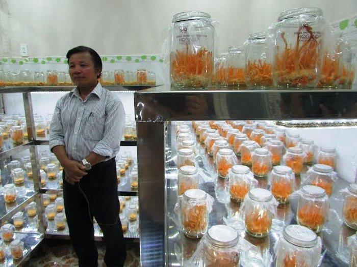 Đông trùng hạ thảo được nuôi trồng thành công ở Việt Nam
