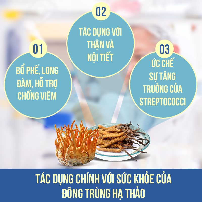 03 tác dụng chính với sức khỏe của đông trùng hạ thảo
