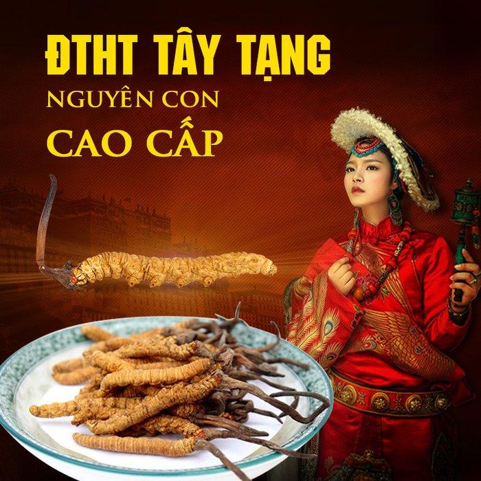 Đông trùng hạ thảo Tây Tạng nguyên con cao cấp