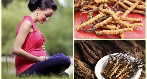 Đông trùng hạ thảo và phụ nữ mang thai