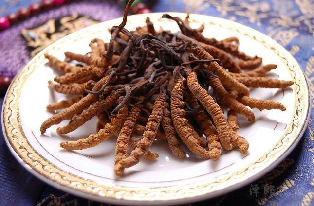 Đông trùng hạ thảo Tây Tạng với chiều dài 3 – 5cm/con