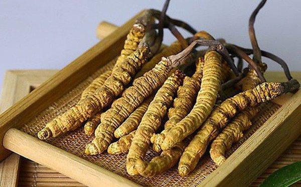 Đông trùng hạ thảo Tây Tạng giúp bảo vệ tim mạch hiệu quả
