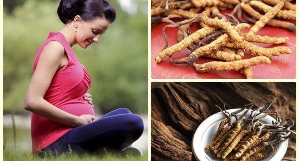 Đông trùng hạ thảo giúp nâng cao sức khỏe phụ nữ mang thai