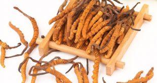Theo Đông y, đông trùng hạ thảo có công dụng tăng cường sinh lực nam giới