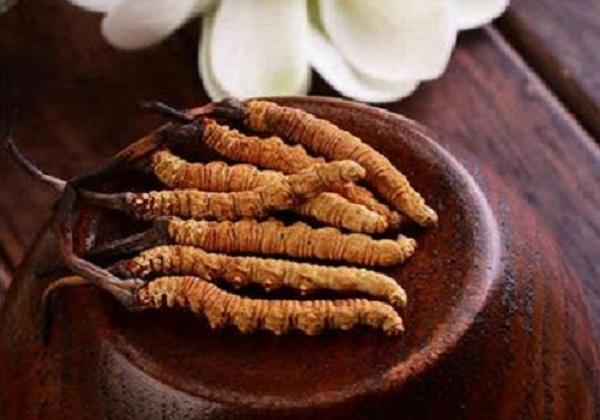 Đông trùng hạ thảo nguyên con Tây Tạng.