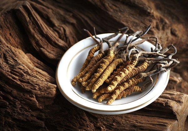 Cơ chế điều trị bệnh thận của hạ thảo là gì?