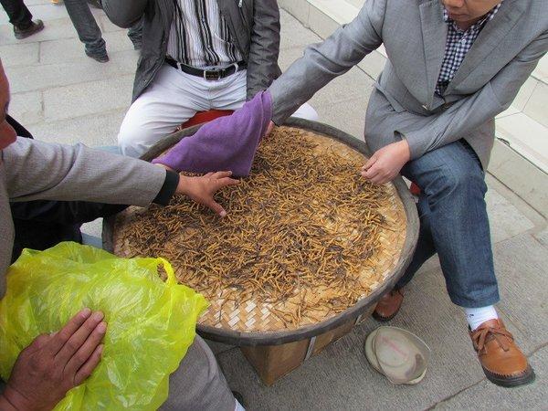 Hiện nay, đông trùng hạ thảo thật và giả được bày bán rất khó để phân biệt