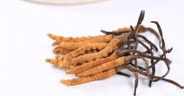 đông trùng hạ thảo là loại dược liệu vô cùng quý giá từ xưa đến nay