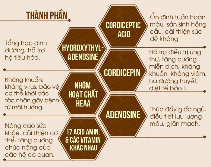 trong đông trùng hạ thảo chứa hàng loạt các dưỡng chất có lợi cho cơ thể